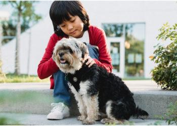 Niño vende sus cartas de Pokemón para salvar a su perro enfermo. Foto: Pexels
