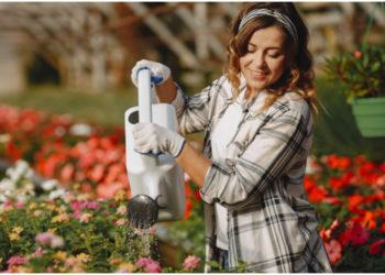 Cuidar plantas en casa puede darte felicidad y aumentar tu creatividad