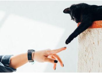 Chequea todos estos modelos de manicure de gato