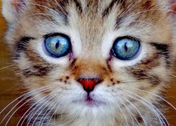 Embarazada adopta a una gata callejera, dan a luz el mismo día y se vuelven virales